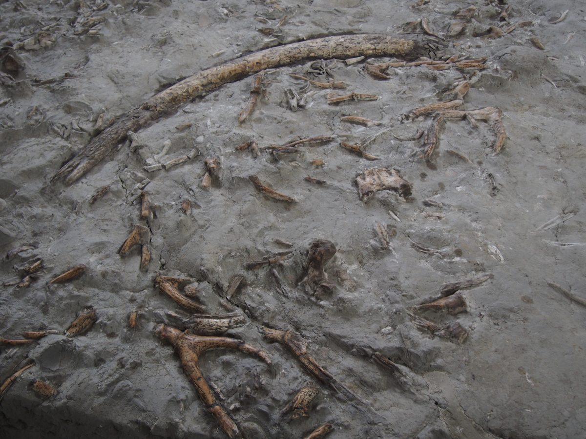 金沙遗址·象牙、野猪獠牙、鹿角坑