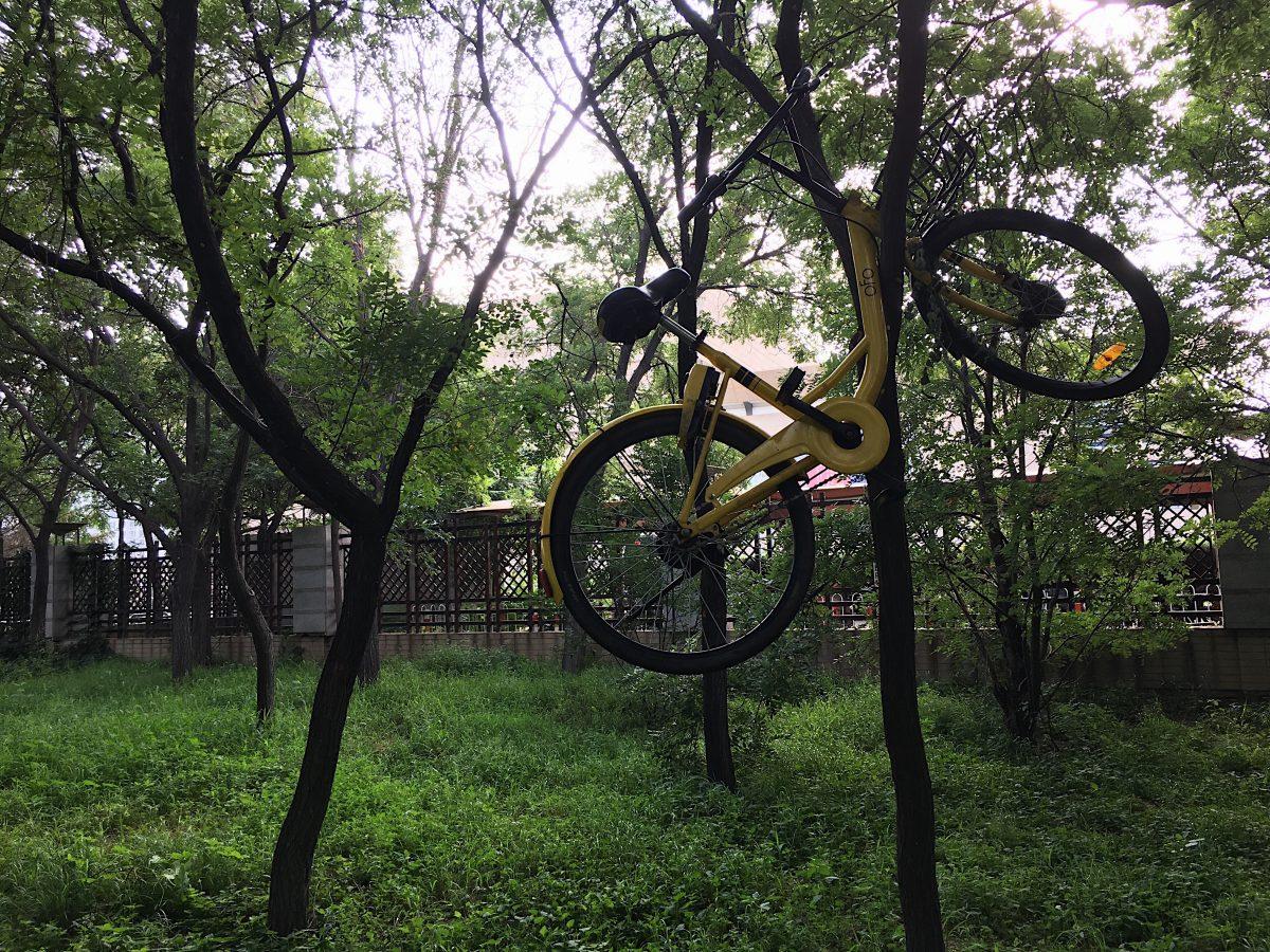 树上的 OfO 小黄车 自行车