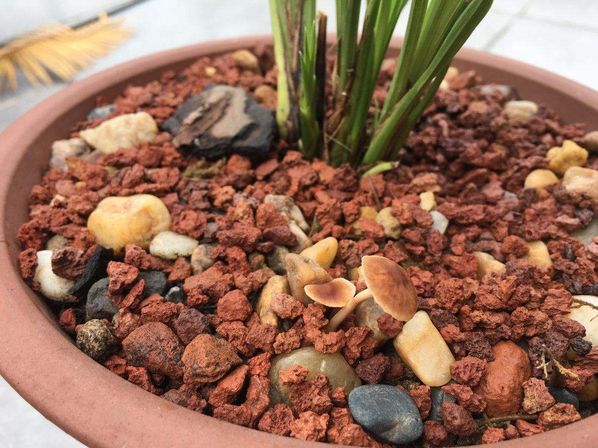 兰花·菌类植物
