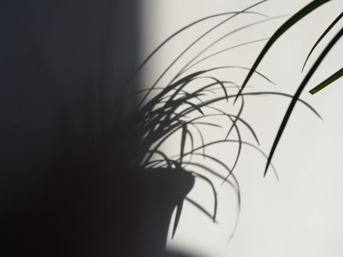 兰花·黑白·影子