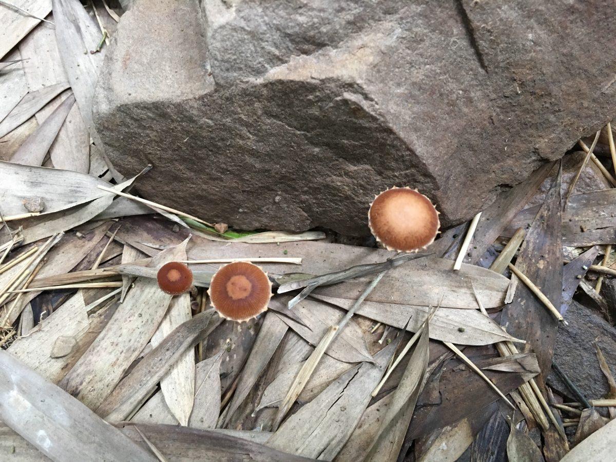 夏季·山林·蘑菇
