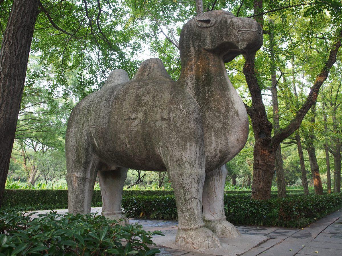 明孝陵·石刻·骆驼