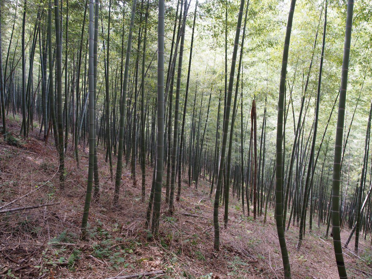 初冬宜兴南岳寺徒步