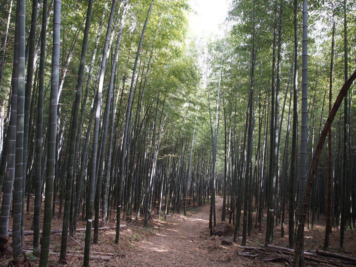 宜兴南岳禅寺·徒步