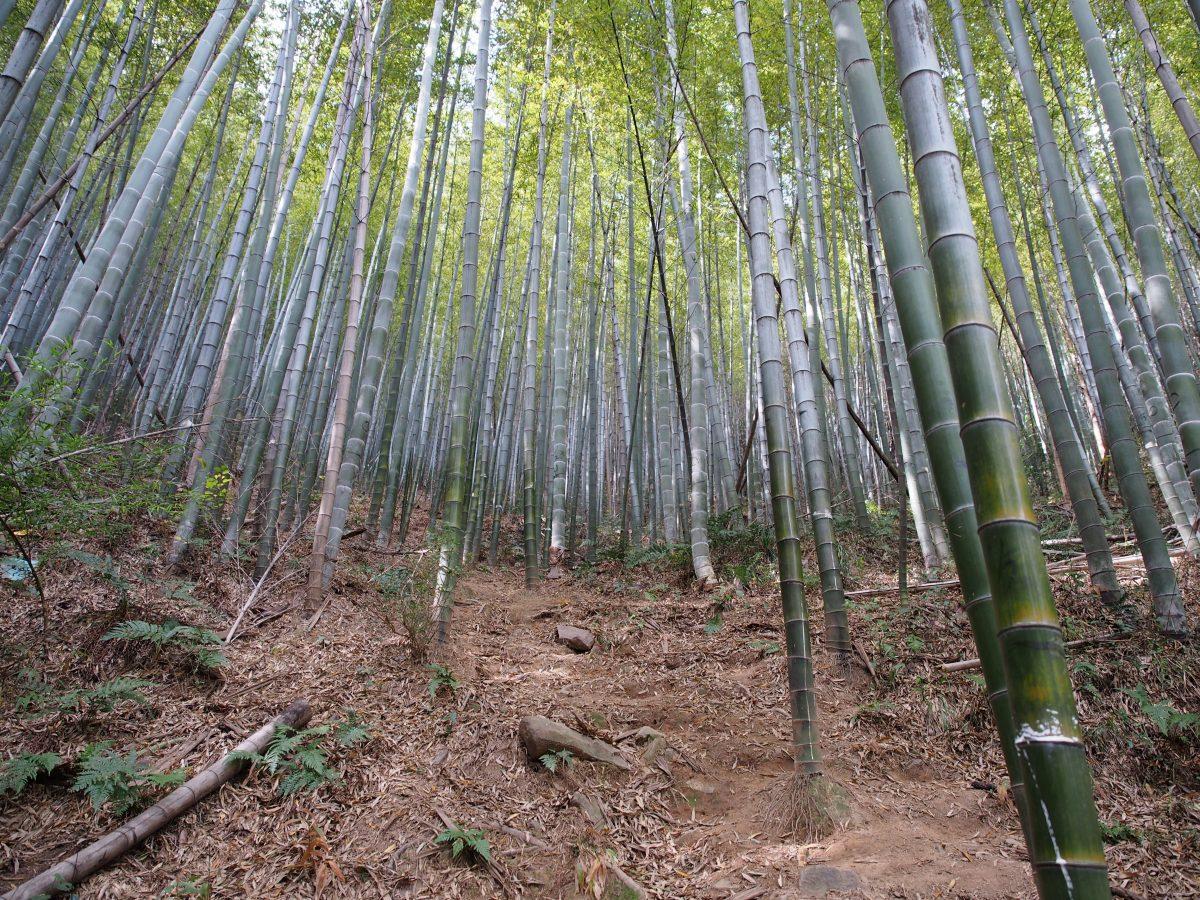 南岳寺竹林