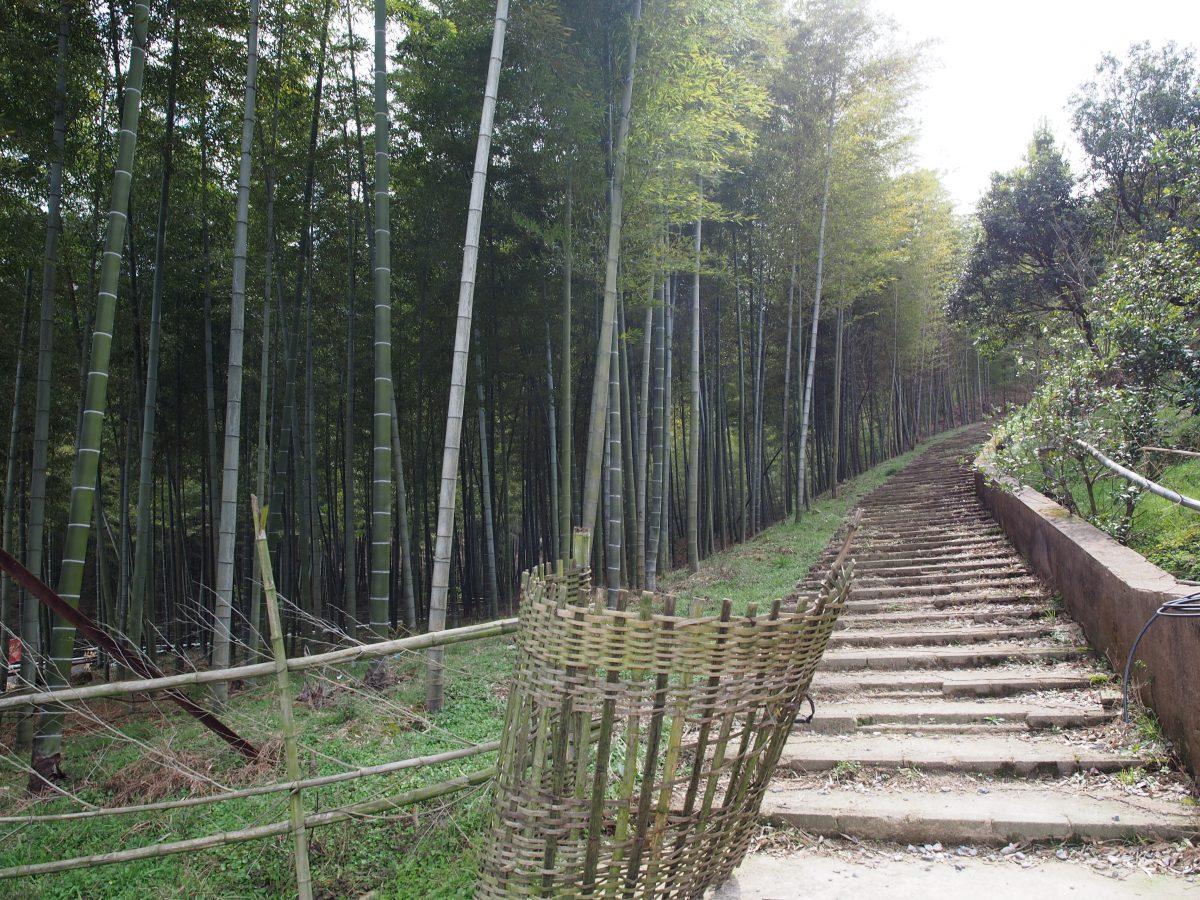 岭下村登山道
