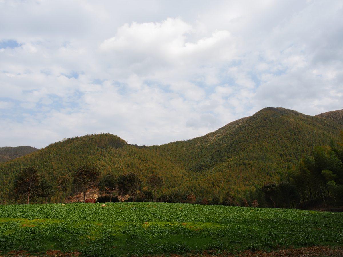 山坳中的小块农田