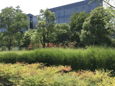 绿植掩映下园区的办公楼