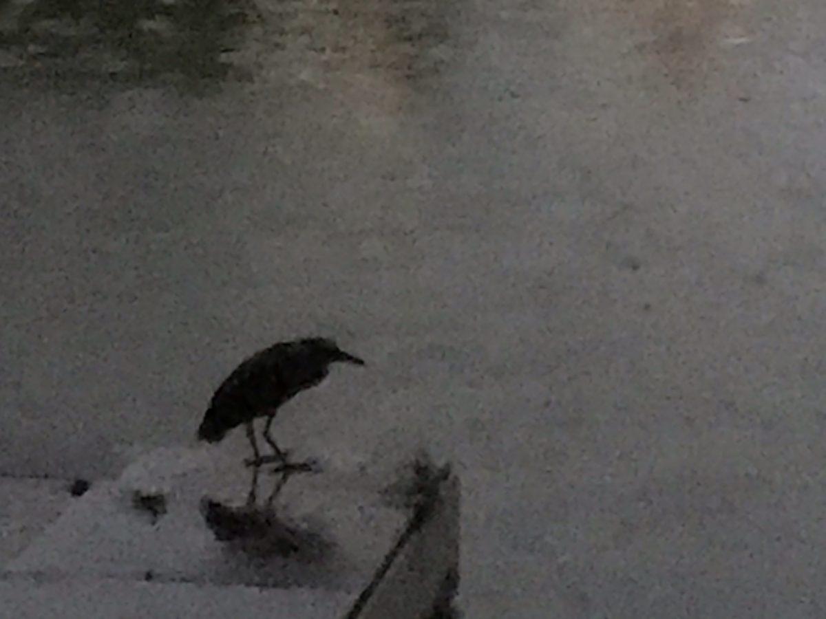 雨中的水鸟