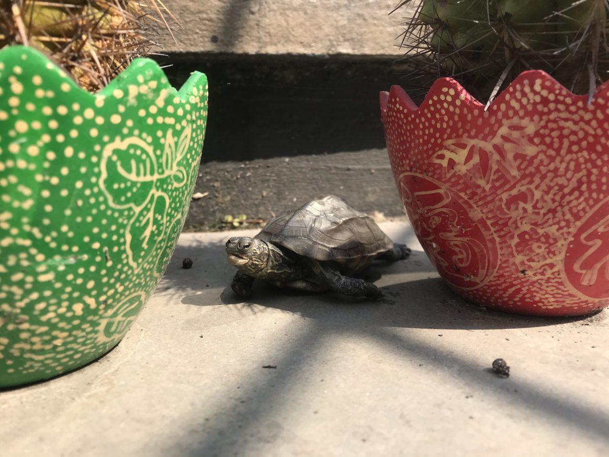 仙人掌·多肉植物·乌龟🐢