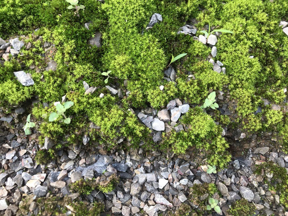 青石子·苔藓